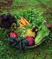 VegetableGarden3